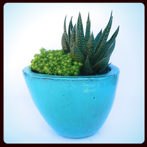 succulent-arrangements-in-contemporary-containers