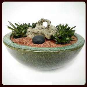 succulent-arrangements-in-low-profile-containers